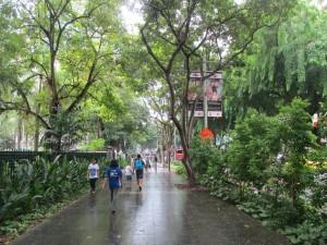 Street view after rain