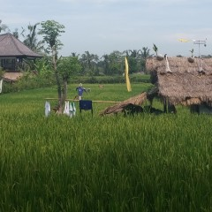 Rural Ubud Bali Indonesia